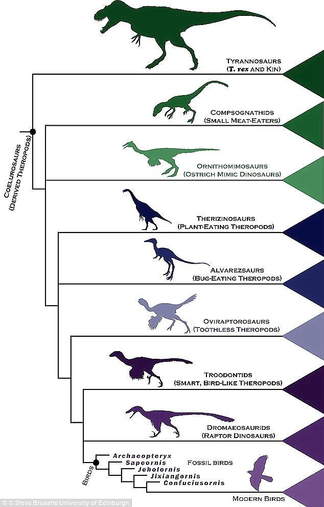 18-5-3-1447214692DA6300000578-5104527-Both_birds_and_reptiles_descended_from_archosaurs_who_dominated_-a-113_1511282017778
