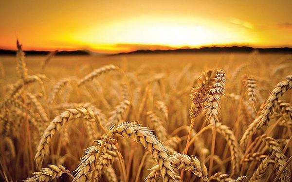 راهاندازی صندوق کالایی کشاورزی در بورسکالا چه مزایایی دارد؟