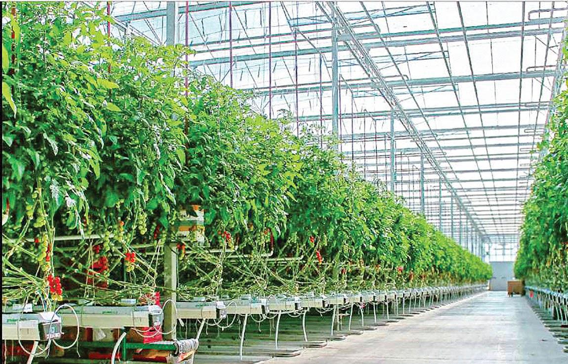 اعتبار مالی برای طرحهای گلخانهای