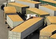 واردات گندم آمریکایی