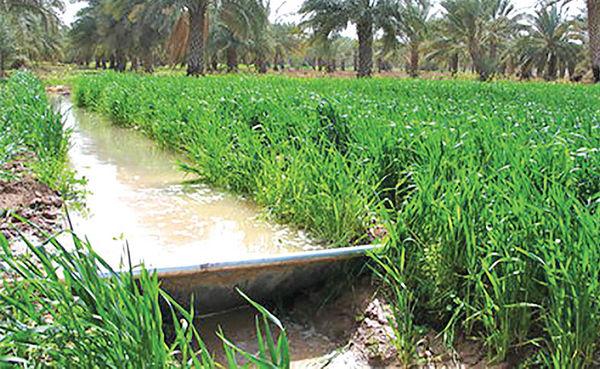 تامین آب کشاورزی خوزستان