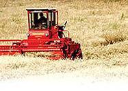تورم نرخ محصولات کشاورزی