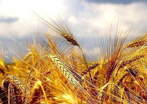 دستاوردهای ارزنده  در بخش کشاورزی