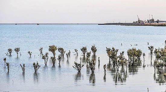 یکپارچهسازی سواحل خوزستان