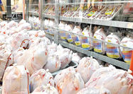 آغاز توزیع مرغ منجمد با قیمت مصوب