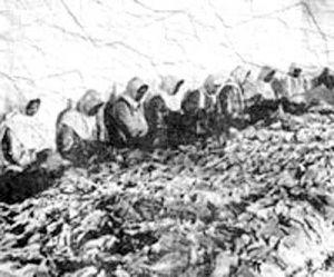 کاشت اولین بذر توتون سیگار در ایران