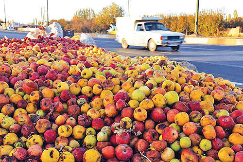 آذربایجانغربی؛ قطب تولید و صادرات سیب