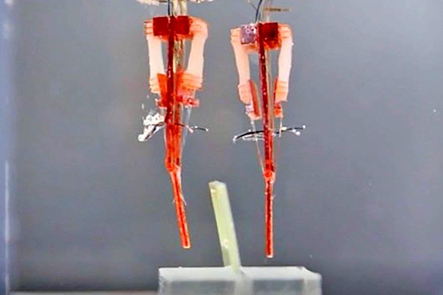 عملکرد واقعی دست روباتها با عضلات زنده آزمایشگاهی