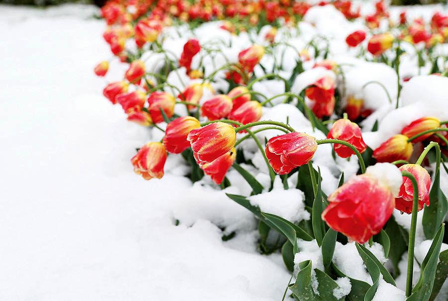 برف بهاری در کشور