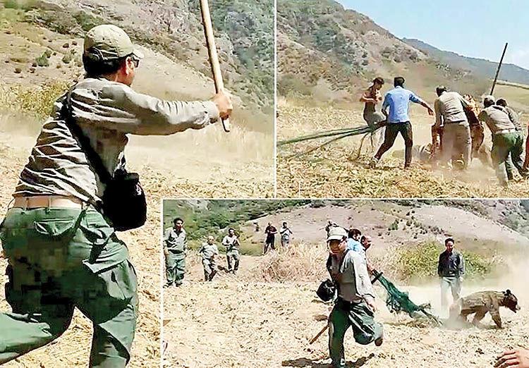 حادثه سنگباران توله خرس در سوادکوه