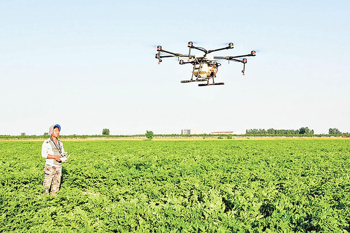 برنامه هوشمند شناسایی آفات محصولات کشاورزی