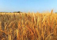 ۳ عامل بیثباتی بازار کشاورزی در ۲۰۱۹